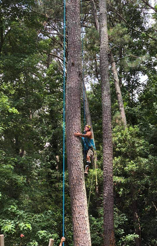 For All Seasons Tree Service in Loganville, GA: Our Tree Cabling Services